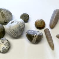 Fossiler & muslinger