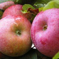 Frugt - bær