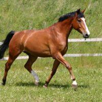 Hest & Pony