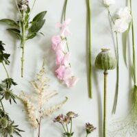 Botanik - Botany