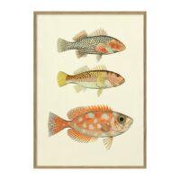 Fisk & fiskeri