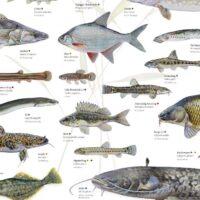 Fiskekogebøger